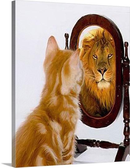 Brave Cat Photo on Pop Art
