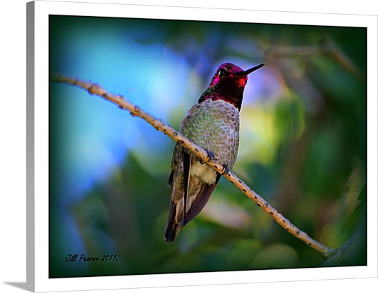 Photo of Bird on Canvas
