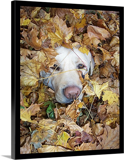 Photograph of Dog in Leaves on Pop Art