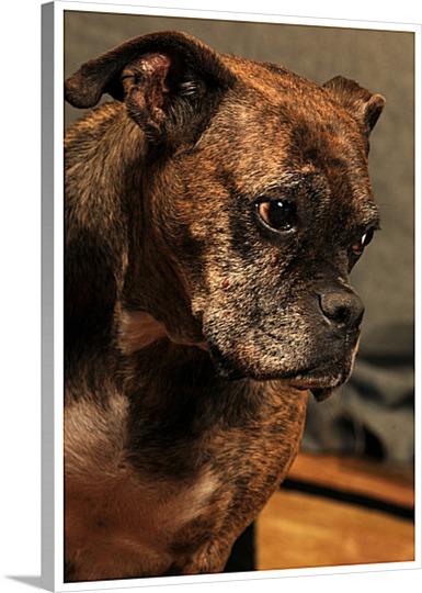 Artistic Dog Photo on Canvas Pop Art