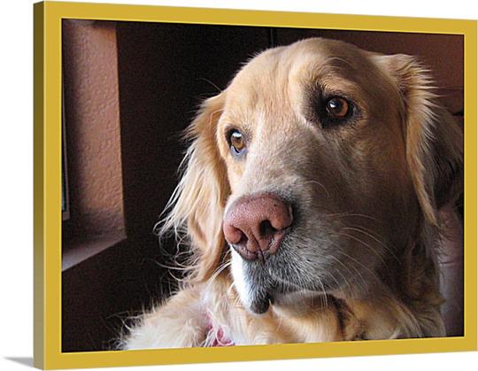 Reflective Labrador Photo on Canvas