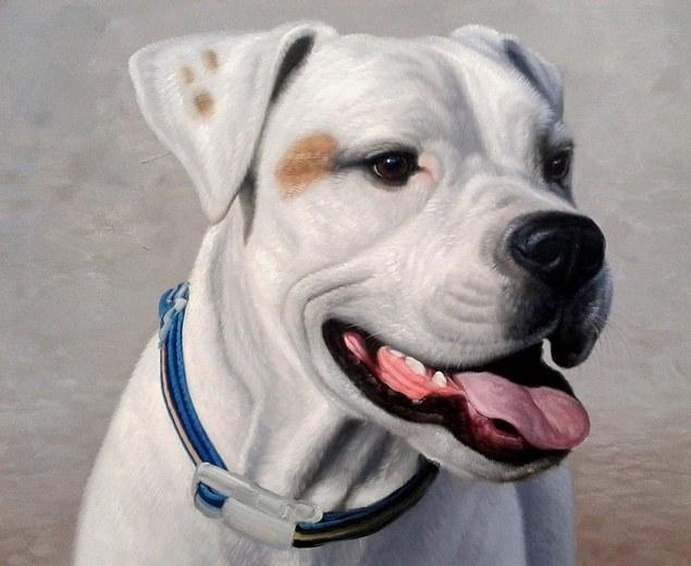 795c726daca9 paint your pet - pet portrait in oil