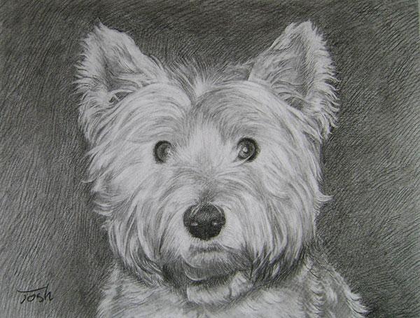 Terrier drawing