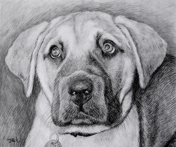 custom drawing of a dog