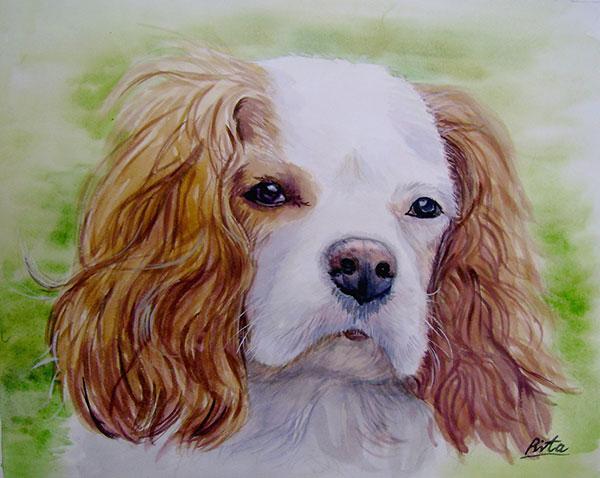 custom watercolor painting Cavalier King Charles Spaniel