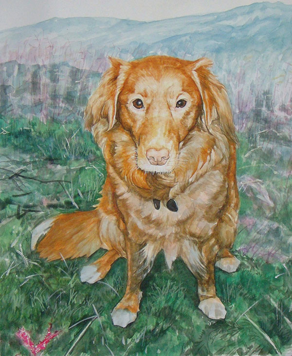 custom watercolor painting of Noca Scotia Duck Tolling dog