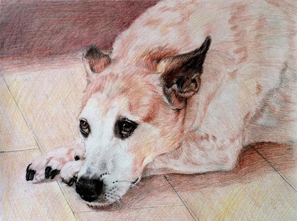 pet portraits - dog pencil sketch