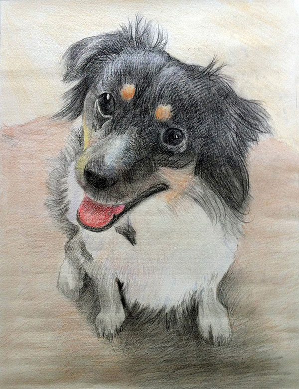 dog portrait in color pencil