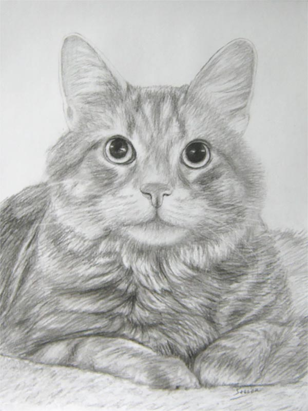 Retratos de gatos sobre lienzo