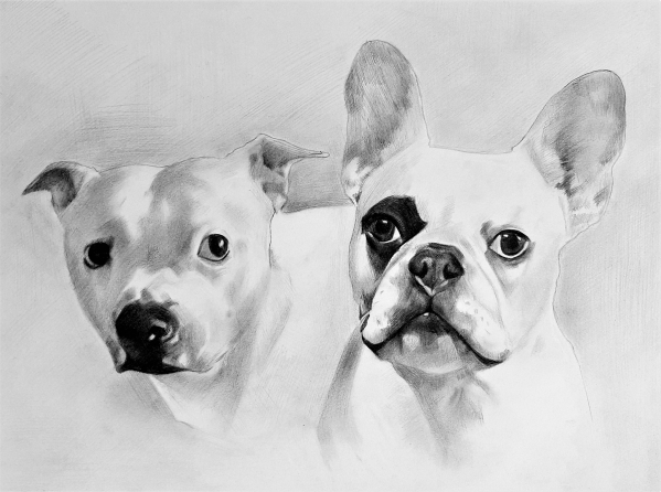 Charcoal drawing of two dogs with solid background