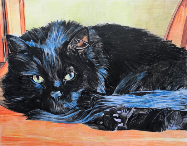 custom colored pencil drawing of a black cat laying