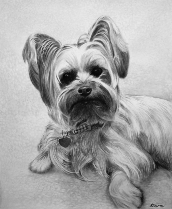 photorealistic charcoal portrait of dog