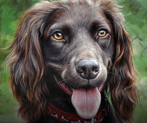 All Pet Portraits