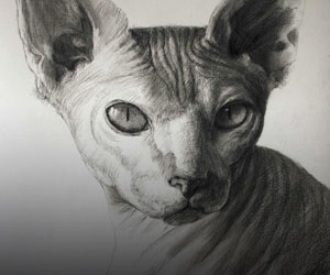 Cat Charcoal Portraits