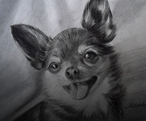 Dog Charcoal Portraits