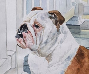 Dog Watercolor Portraits