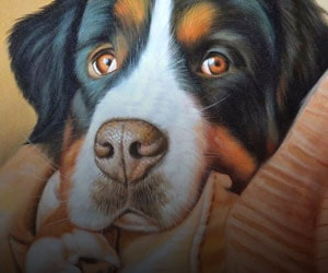 Pet Oil Paintings