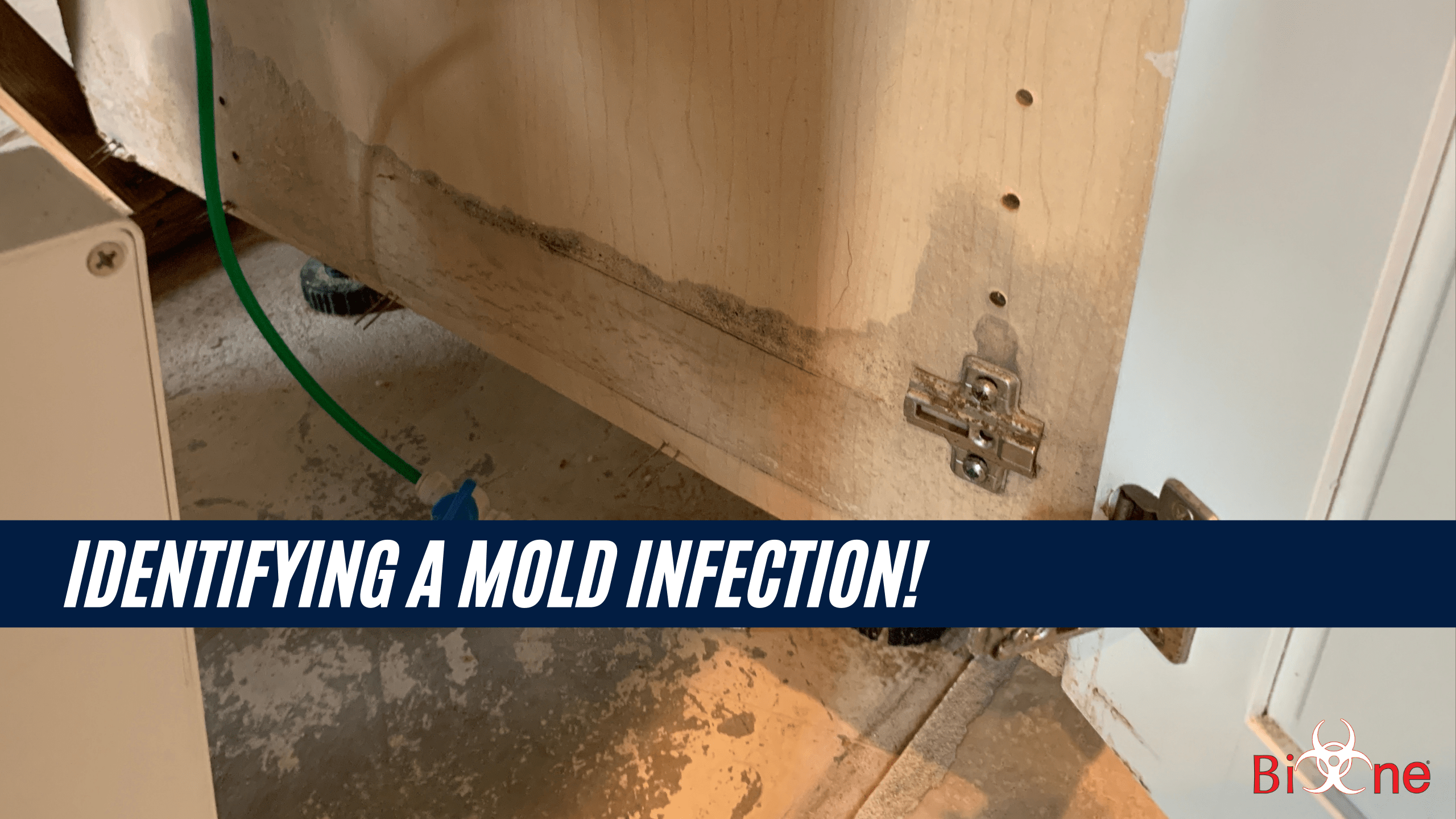 "Image shows mold damage on a Kitchen gabinete. Image also has a tittle banner that says ""Identifying a Mold Infection!"". Bio-One Logo is at the bottom right corner."