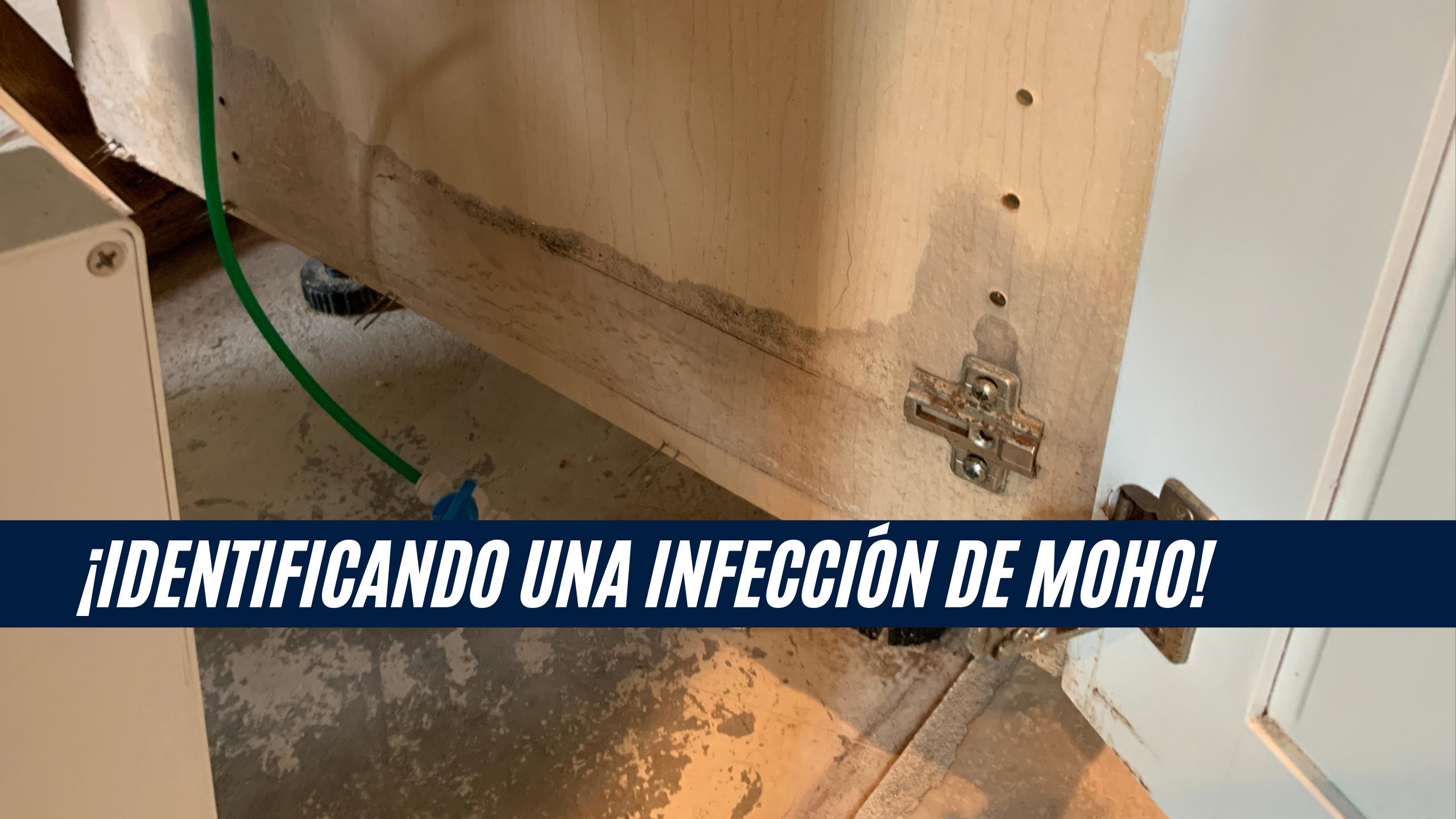 """La imagen muestra daño por moho en una puerta de gabinete de cocina, con una barra con el título """"¡Identificando una infección de moho!"""""""