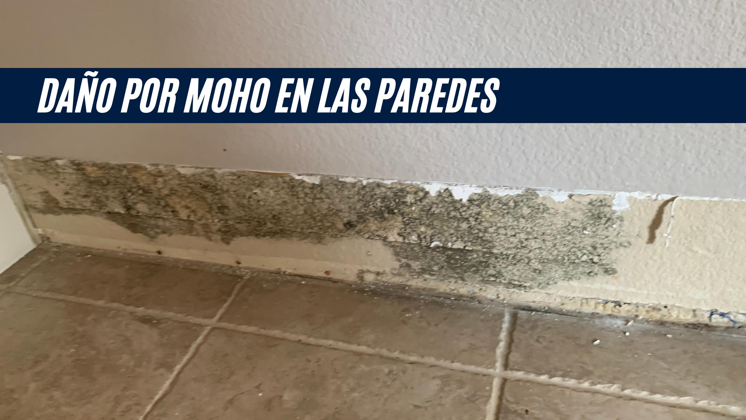 """La imagen muestra daño ocasionado por moho en las paredes de una casa, detrás de zócalo piso. Tiene una barra con el título """"Daño por moho en las paredes"""""""