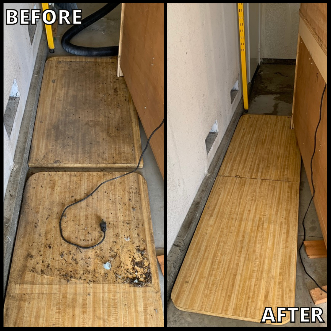 """Image shows before-and-after pics of a rodent infestation. It has a banner on the bottom with text """"Bio-One of Oceanside, 2021."""""""