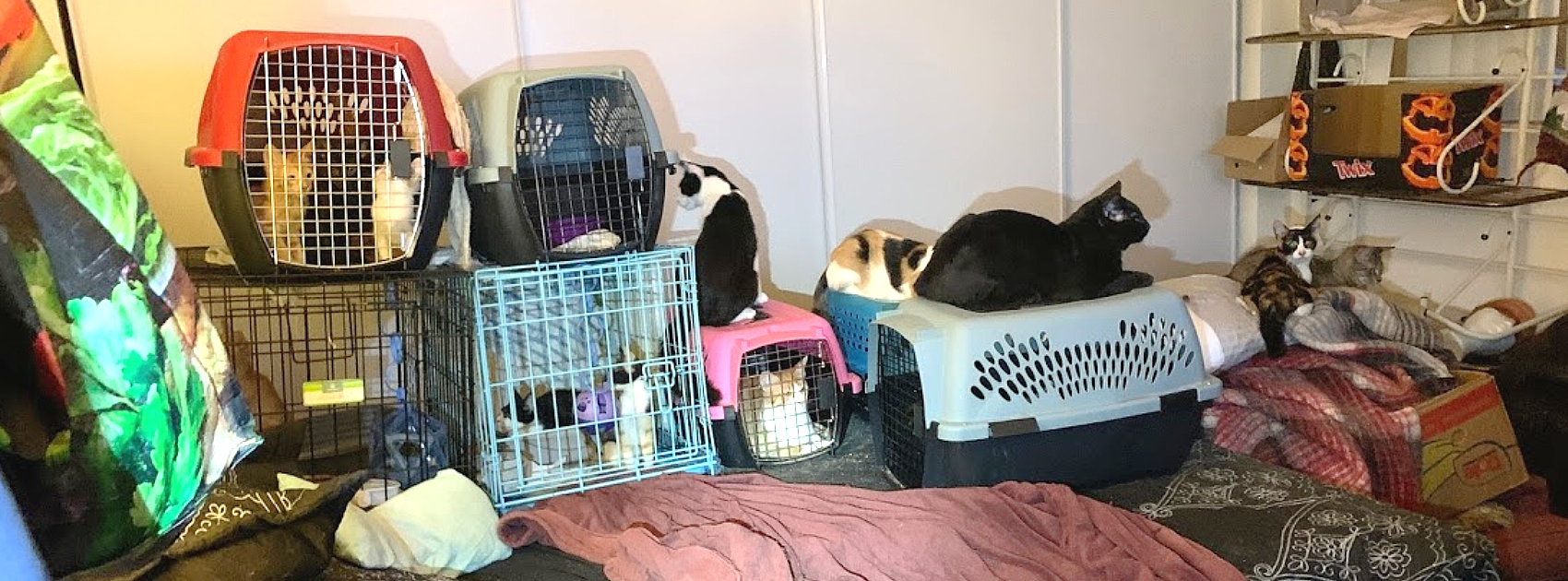 Image shows a bedroom with multiple cats, some of them locked in cages on top of the bed.