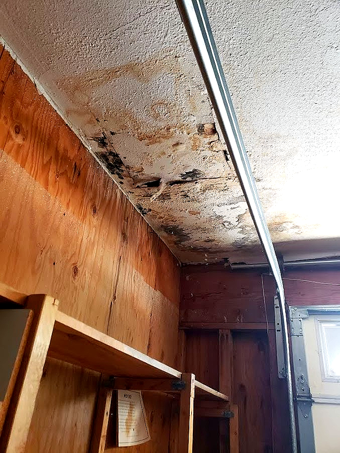 Image shows black mold and other mold causing damage to a ceiling board and wooden structure.