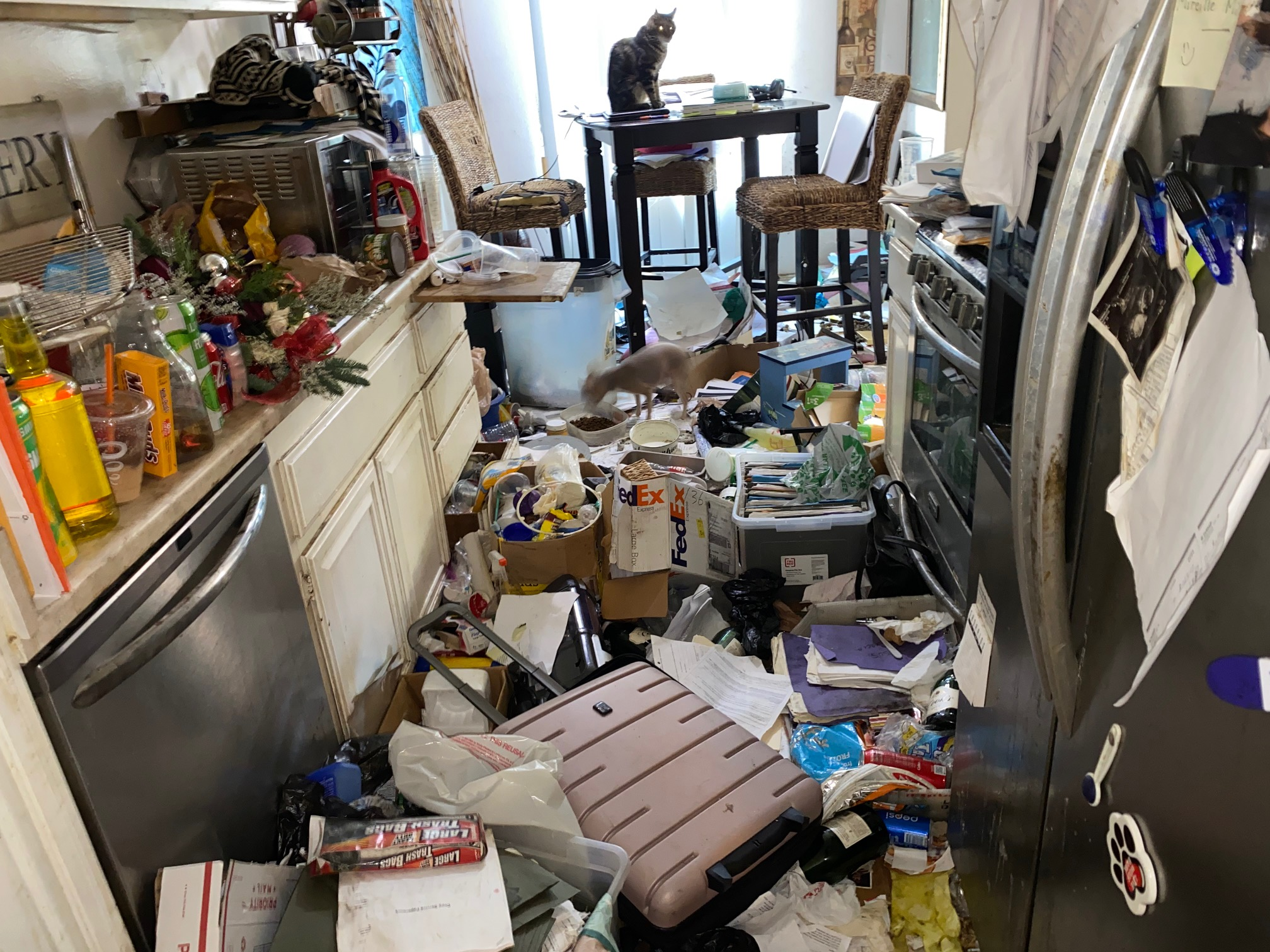 Image shows a kitchen area filled with trash, clutter and even cats. It's near impossible to move around the area, let alone use the kitchen stove and counters.