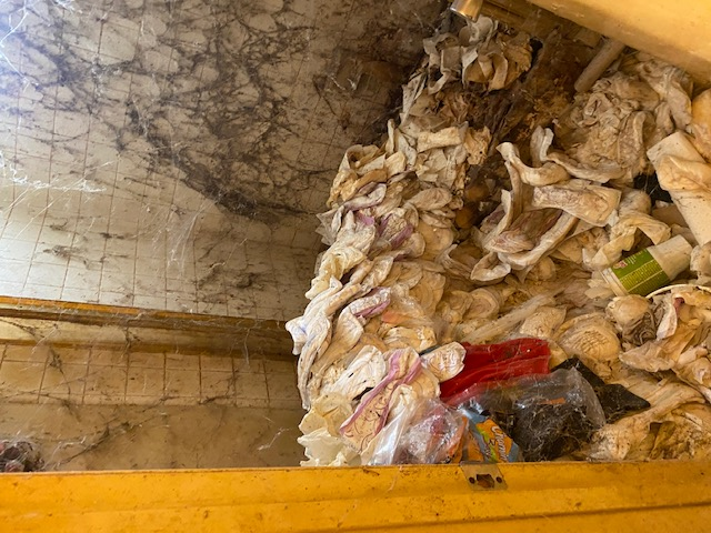 Image shows the inside of bathroom cluttered with sanitary towels and used toilet paper. The walls are covered with spider webs.