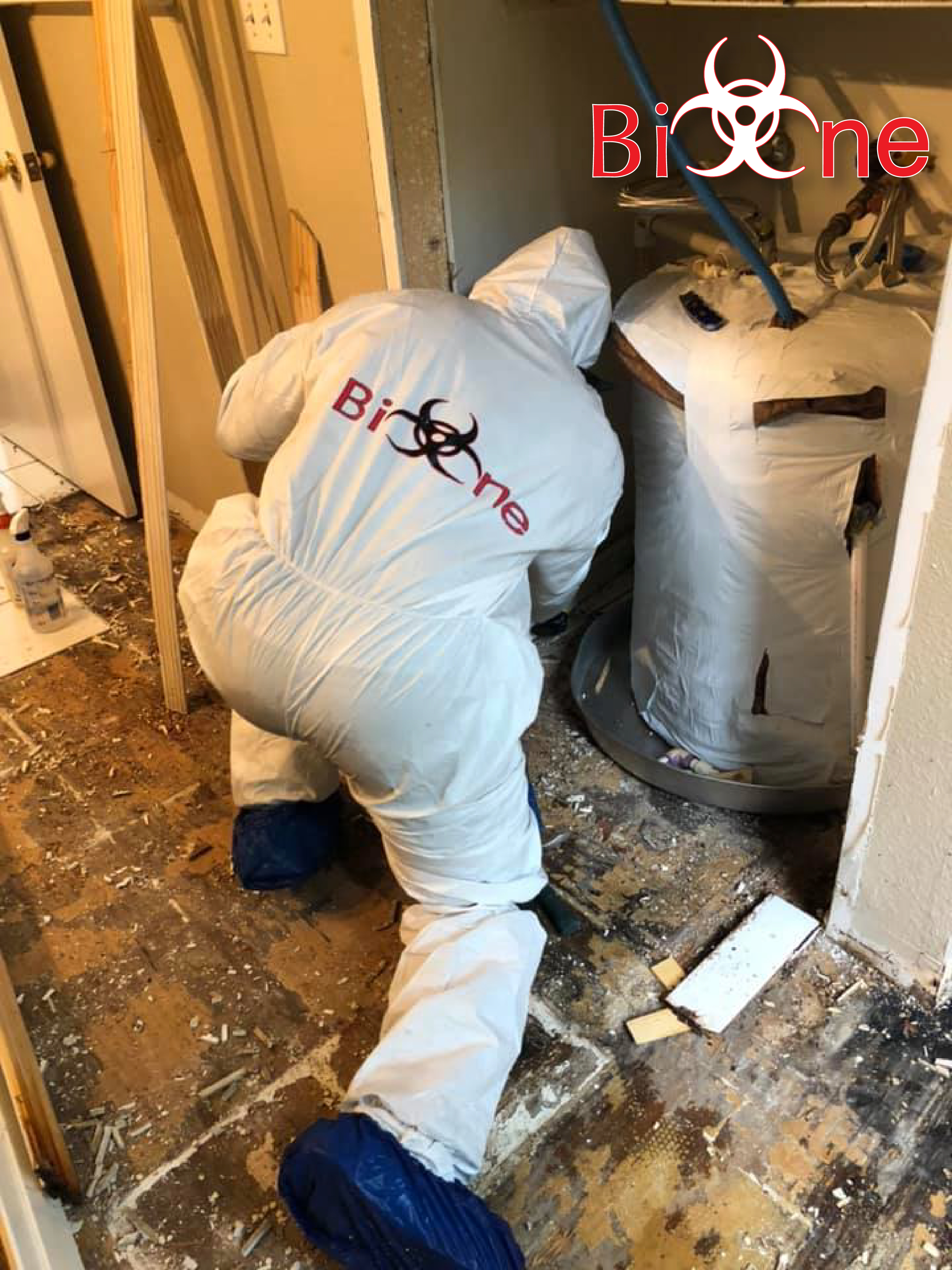 Bio-One certified technicians will thoroughly revise your house or property to clean and remediate damage from rodent droppings.