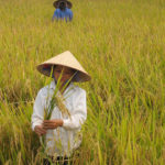 COVID-19/Philippines: Dynamic Agriculture is Key to Faster Recovery and Poverty Reduction