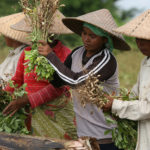 Featuring Food Security on G20 Agenda, leads to several Food Coalition