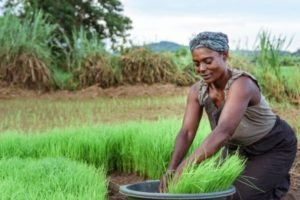 Haitian farmers receive help to recover from Covid-19 and increase Food Production