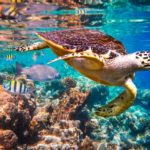 UNEP-ICRI launches new Grant Programme to support conservation of Marine Habitats