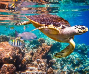 UN Report demonstrates crucial role of World Heritage marine sites in fighting climate change