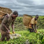 Severe underfunding of Agri-food sector preventing Africa from reaching its potential - FAO