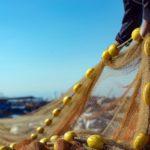 FAO: Aquaculture is vital to meet increasing food demand