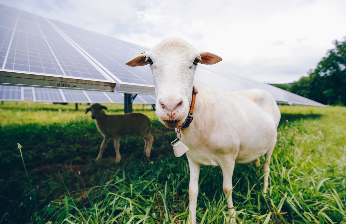 High Tech Meets Low Tech At Furman Solar Farm Furman News