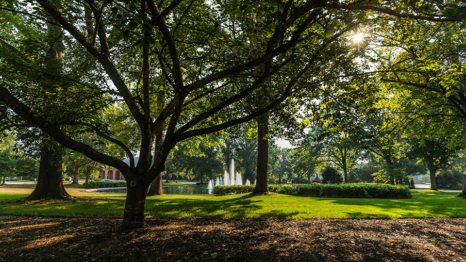 For the 10th time, Furman has received a Tree Campus USA® recognition from the Arbor Day Foundation.