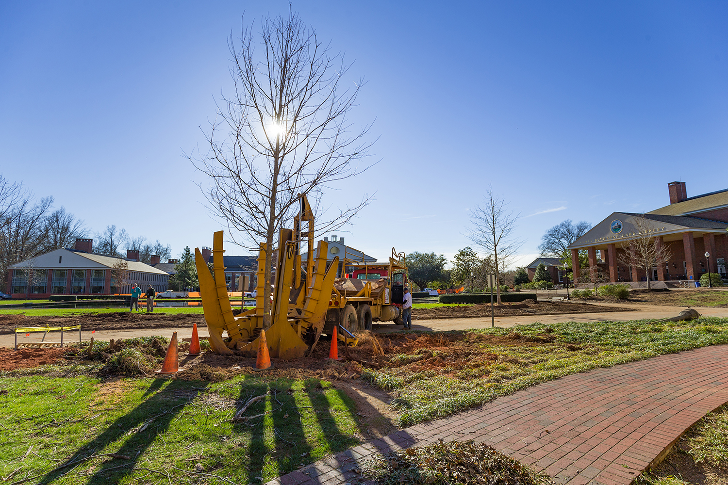 A large tree spade, a planting device like a backhoe, plants a young tree on a sunny day.