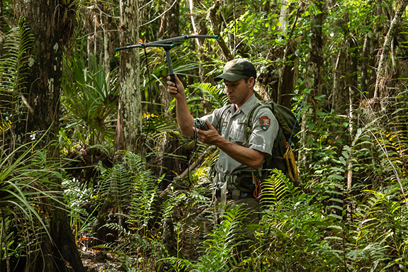 Matthew McCollister holds a Burmese python-tracking antenna in Big Cypress National Preserve