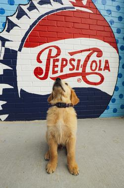 A dog sits in front of a mural painted by MayX students