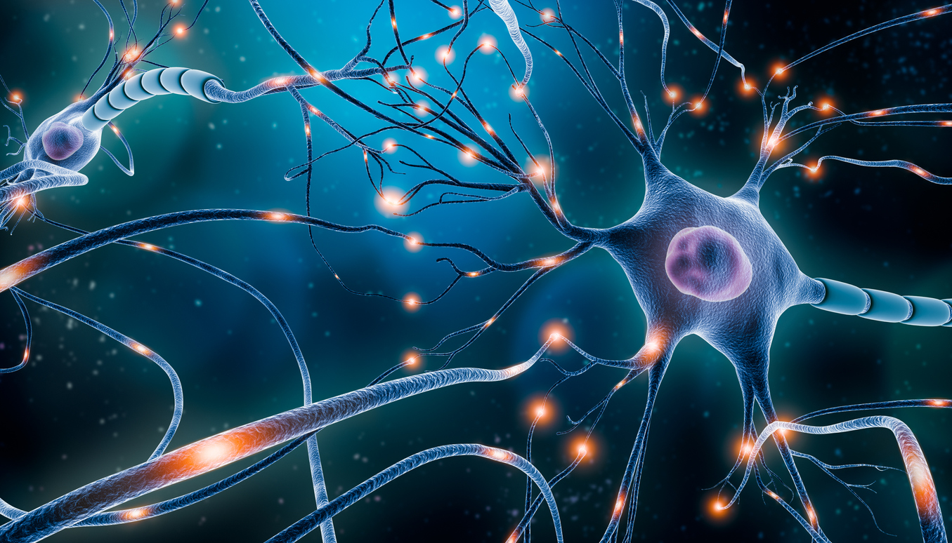 image of neurons