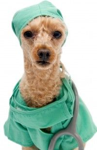 The Healing Power of Pets Dr. Dog