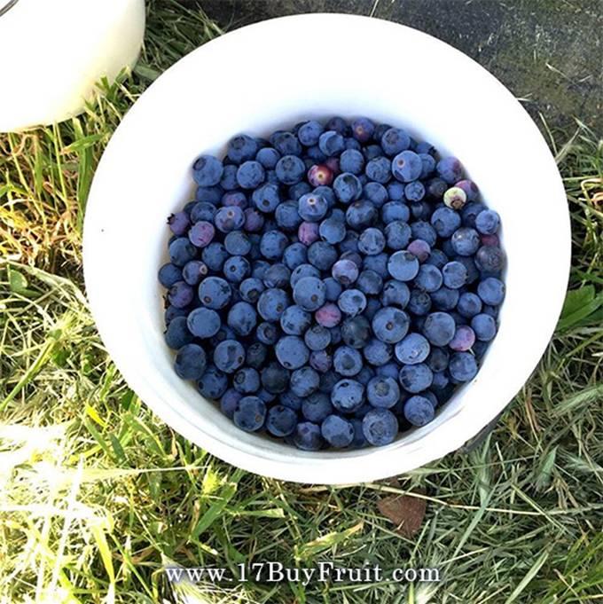 新鮮有機藍莓