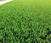 Tele2 Arena får nytt gräs