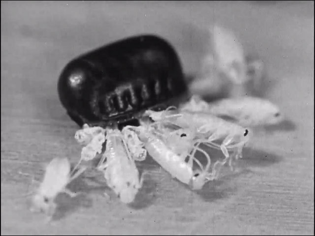 Good bye mr roach ca 1959 image normal