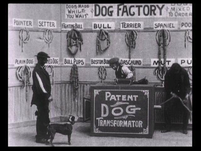T1 dog factory 1904 image normal