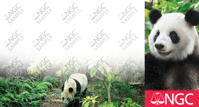 PRESS RELEASE: NGC Special Label & Designation for 2018 Pandas PRESS RELEASE: NGC Special Label & Designation for 2018 Pandas label 383 sample
