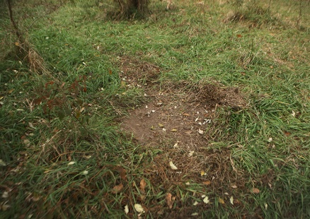 Deer will use their hooves to pull away vegetation leaving a bare patch on the ground called a scrape.